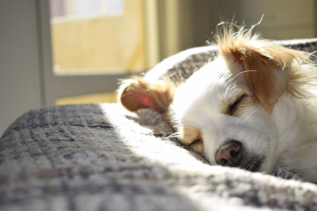 Popular Dog Breeds and Their Health Problems